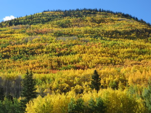Fall colors in the Rocky Mountains